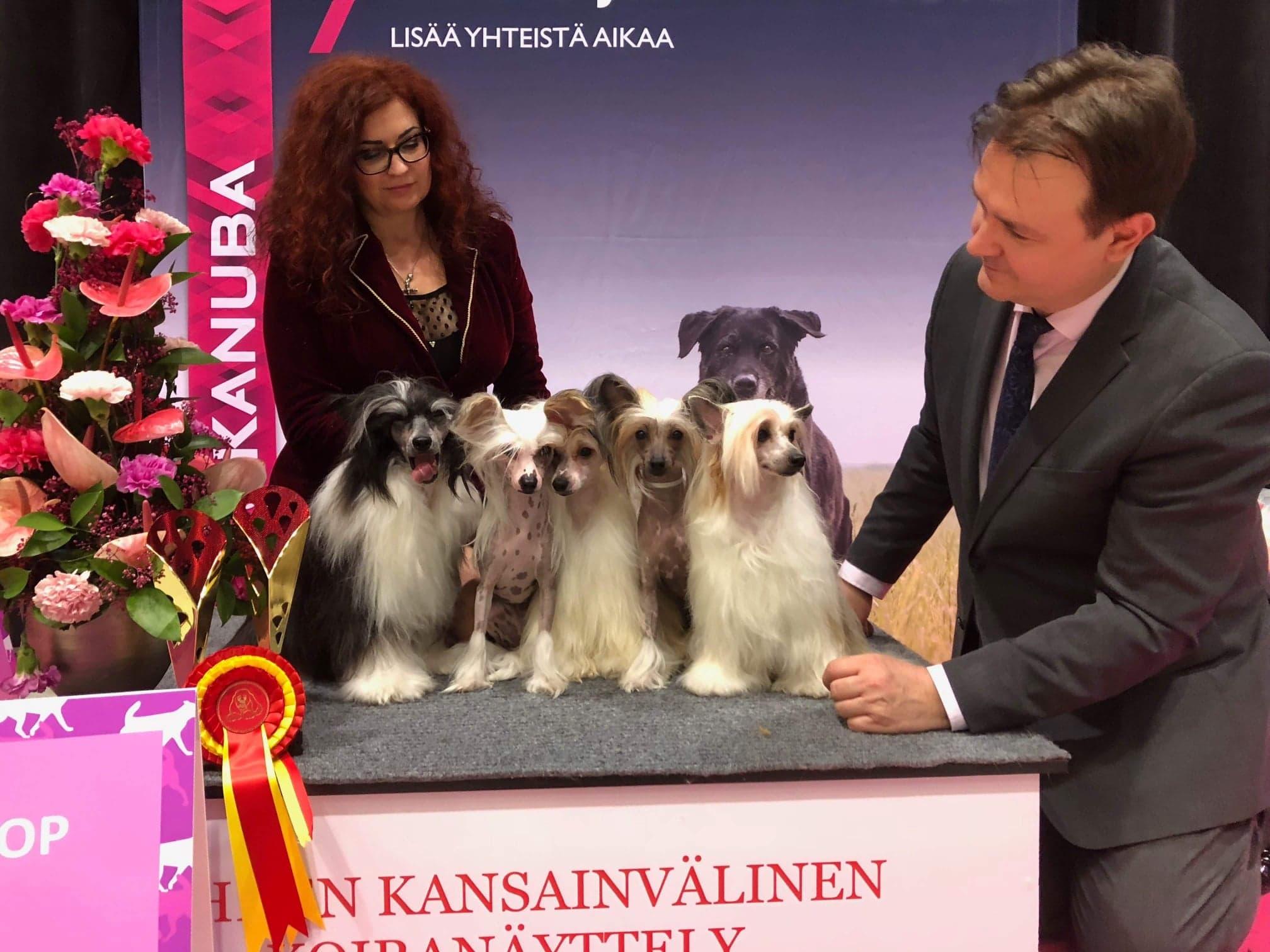 Samu ja Lella Wikström  kiinanharjakoirineen näyttelyssä